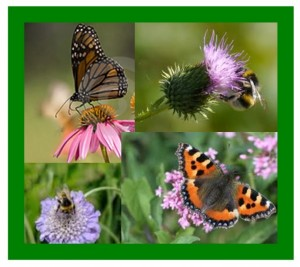 Butterfly & Bumblebee monitoring